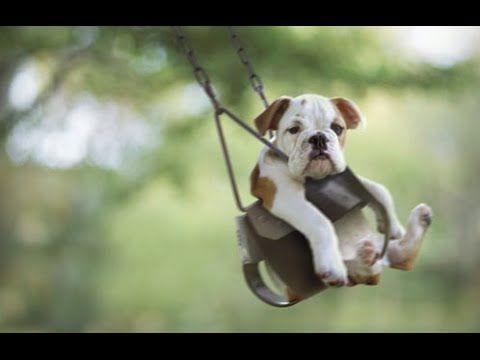 Cão Cães bonitos em balanços Compilação 2015 Youtube Fotos de palatinos quentes Menu de cupons Mount Prospect 94 Fotos incríveis de cães bonitos Image Inspirations