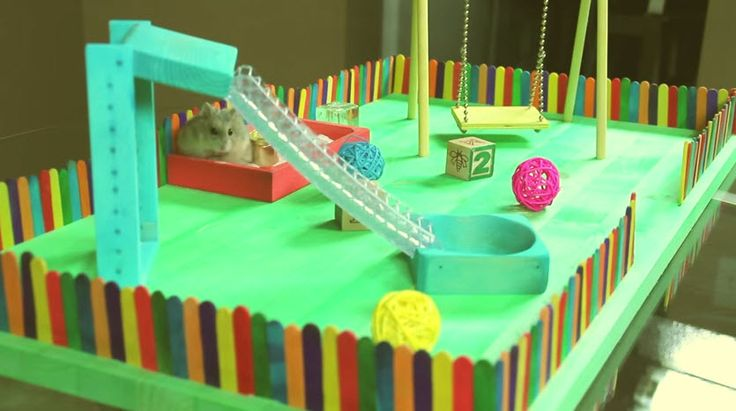 Cute hamsters are taking over social media, and for good reason! To turn your hamster into a superstar, check out this DIY hamster playground.