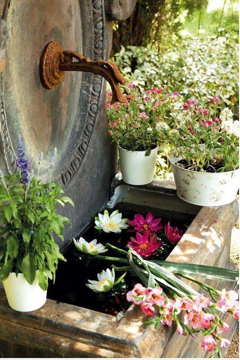 plantas jardim mediterraneoGorgeous Water Fountain