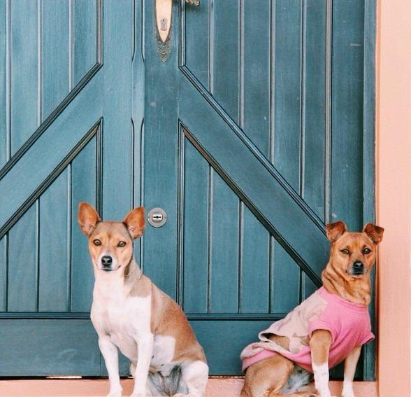6 señales de que NO estás listo para tener un perro | Cuidar de tu mascota es facilisimo.com