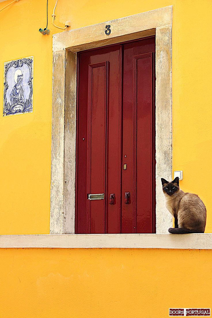 Door and cat in Coimbra-Portugal  (Photo © Doors Portugal)
