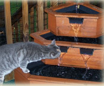 Cat Enclosures - Outdoor Cat Runs - Many Cat Enclosure Pictures