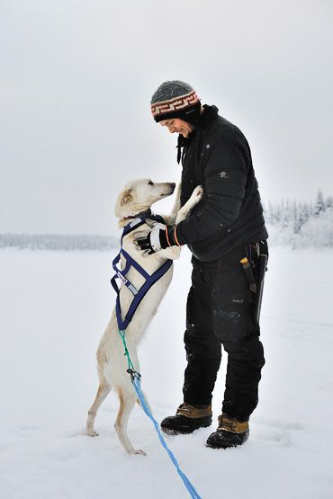 dog sledding in Lapland