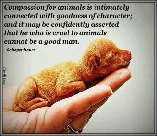 Compassion for animal is intimately connect with goodness of character; and it may be confidently asserted that he who is cruel to animals cannot be a good man.   - Schopenhauer