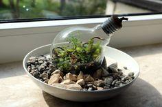DIY Glühbirnen Terrarium selber bauen