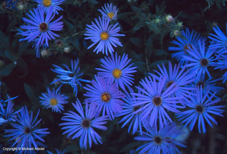 17 best images about drought tolerant flowers on pinterest sun summer and pavement - Flowers that love full sun and heat ...