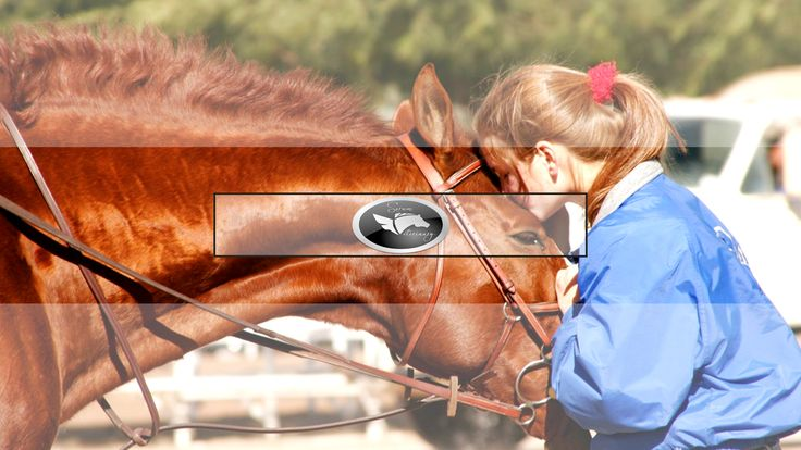 Sorum Veterinary Services is a Horse Vet in Scottsdale, AZ. We offer Equine Therapy Services, Horse Dentistry, Horse Lameness, and more. Give us a call today at # (480) 470-5919