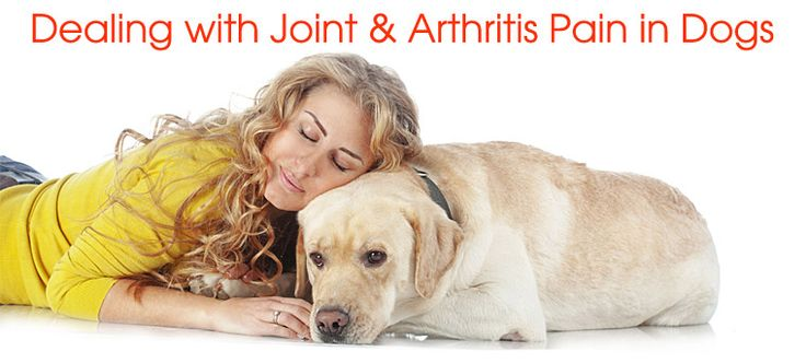 Natural Remedies For Arthritis In Dogs Legs