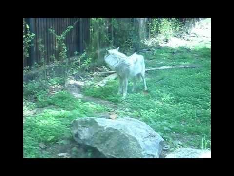 Зоопарк калининградский