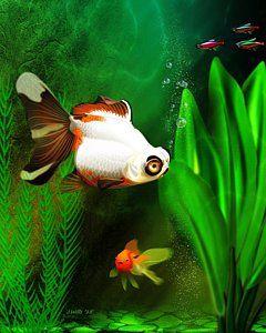 Goldfish Digital Art - Goldfish Aquarium by John Wills
