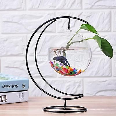 Creative Hanging Clear Vase Fish Tank Plant Flowers Pot Terrarium Decor 15cm
