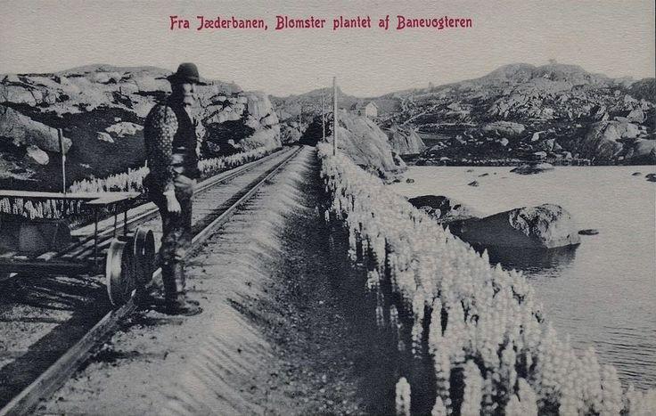 Rogaland Jæderbanen. Blomster -Lupiner-  plantet af banevogteren. Utg N.K. Jærbanen - den gang het det Jæderbanen - ble anlagt fra 1874 til 1878. Jærbanen er jernbanestrekningen mellom Stavanger og Egersund og er en del av Sørlandsbanen