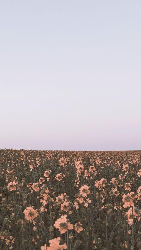 Handytapeten / Super hohe Qualität Herunterladen 9 #Blume #Tapete #Gelb #Sky #Telefon #Hintergrund