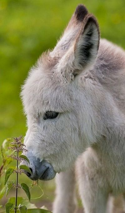 Adorable Donkey smelling the Flowers in the Farm Field