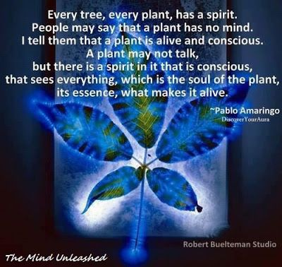 The Mind Unleashed: Amazing Facts about Plants and Consciousness