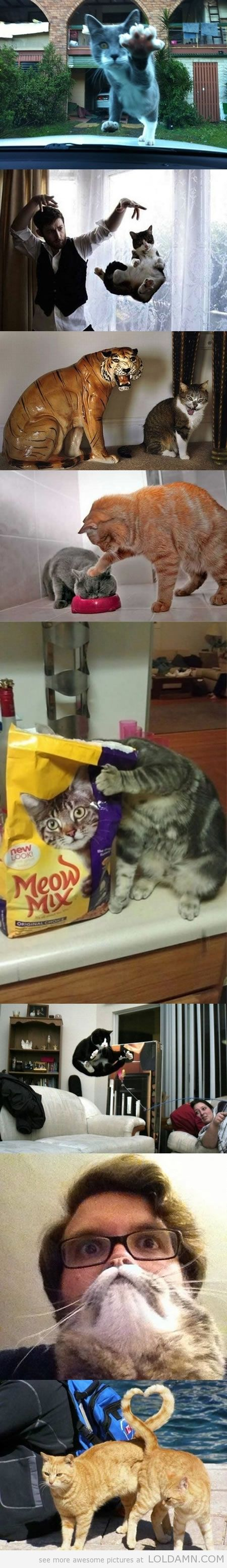 Perfectly Timed Cat Photos, 3rd one down I can't stop laughing