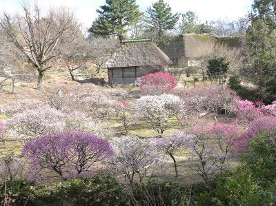 Blossoming trees in rural Japan. Despite massive radiation following the Japanese tsumani, Naoto Matsumura stays alone in his abandoned village to care for the animals left behind.