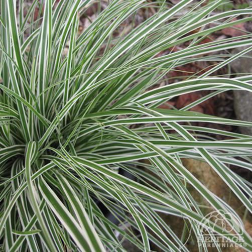 195 best grasses images on pinterest   ornamental grasses, garden, Gartenarbeit ideen