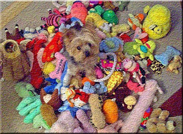 Recicle os brinquedos do seu cachorro