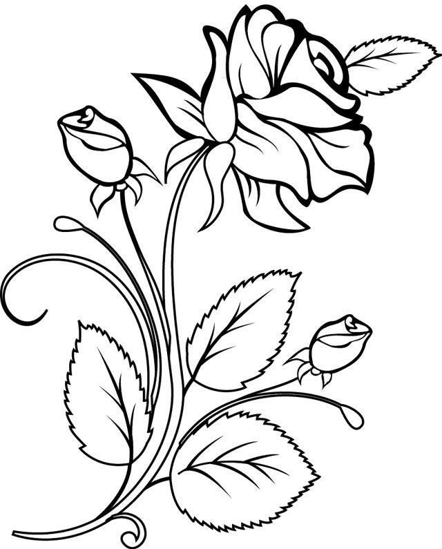 Coloriage, une rose et des boutons de rose - Dory, coloriages