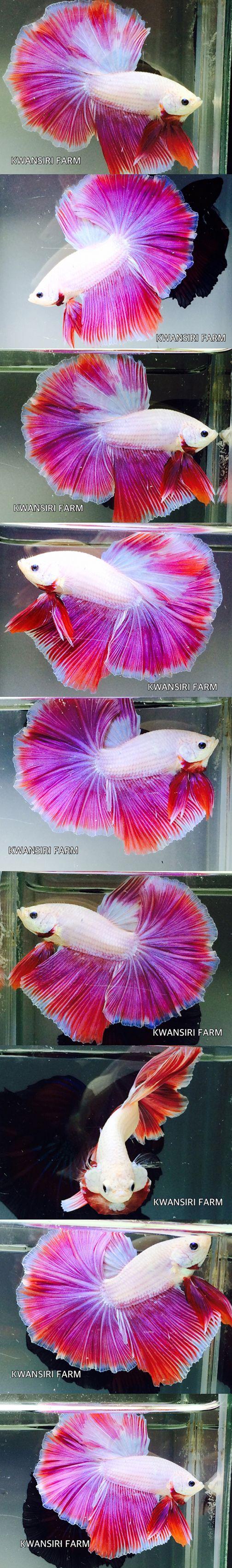 Best 20 betta tank ideas on pinterest betta aquarium for Pink fish tank