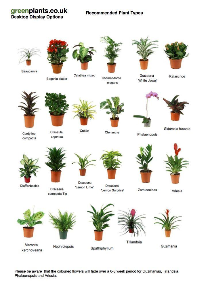 common desktop office plants best office plants no sunlight