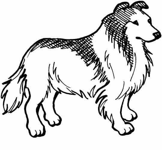collie dog free printable coloring pages great resource for easy to color printables for schoolpre school