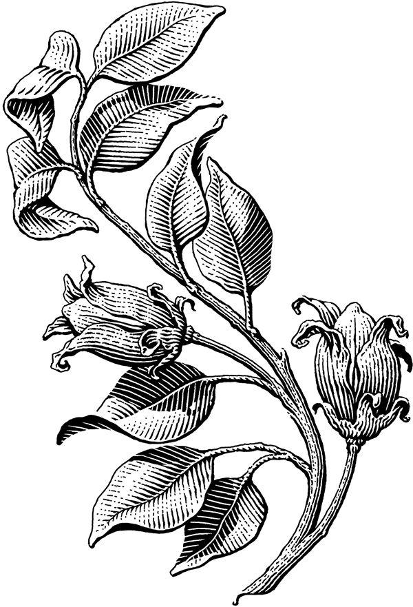 Plants on Illustration Served