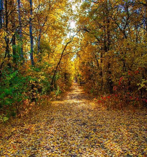 A trail at St. Vital park, Winnipeg, Manitoba, Canada