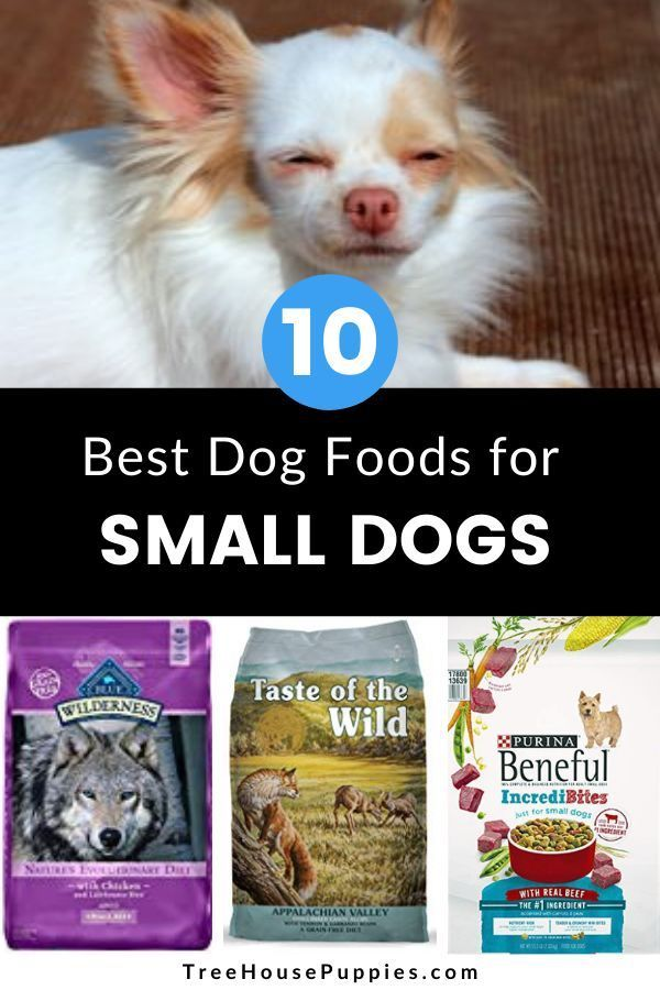 10 Best Dog Foods For Small Dogs In 2020 Treehouse Puppies In 2020 Best Dog Food Small Dogs Dog Food Recipes