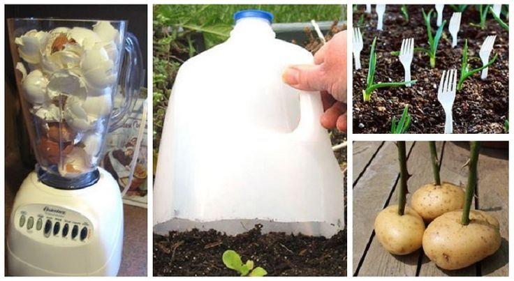16 astuces simples de jardinages qui feront toute une diff�rence!