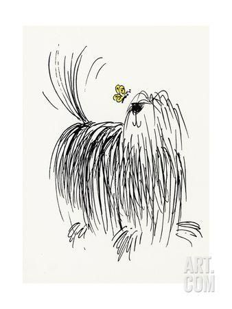 Shaggy Dog with Butterfly Art Print at Art.com