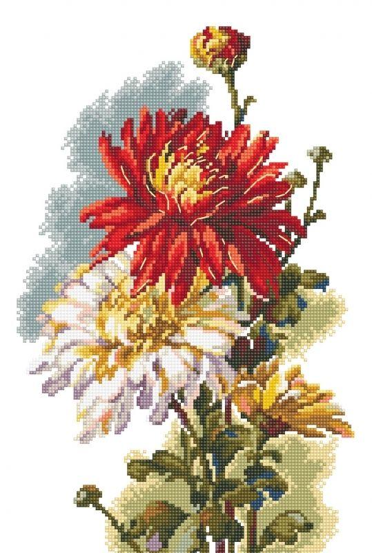 Rośliny - Chryzantema