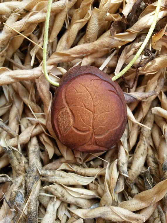 Arbre de vie / Trees of life / Arbol de Vida / Noyau avocat ! Avocado seed!