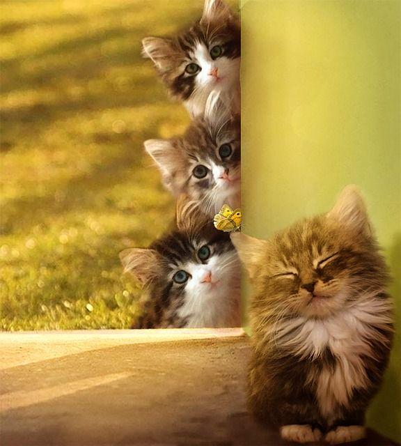 Free Image On Pixabay Morning Cats Dawn Cat Animals