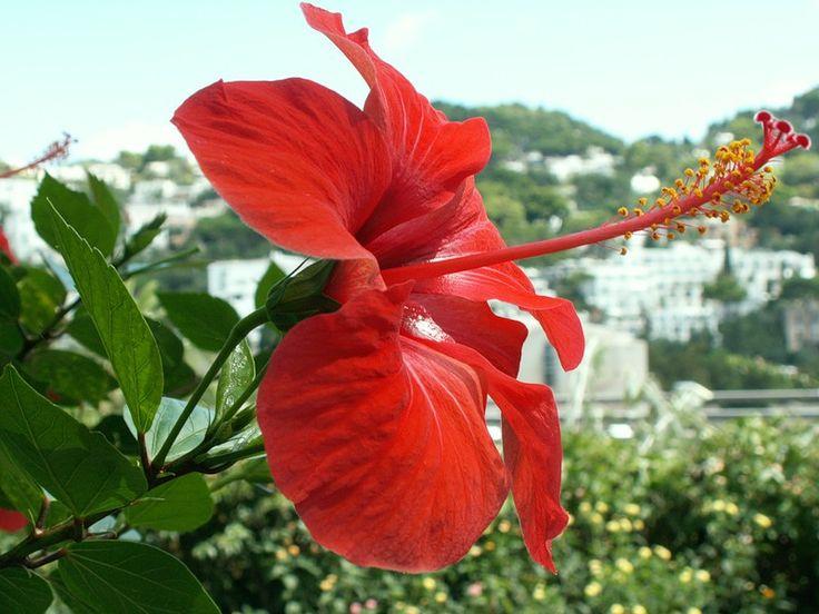 Capri, İtalya Adası. Rus Servis Online Diaries - LiveInternet Tartışma