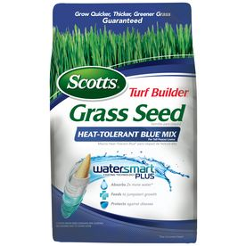 Scotts Turf Builder 20-lbs Sun and Shade Fescue Grass Seed Mixture. Don't worry too much about grass seed type - The most important thing with grass seed is that it needs to be a perennial - which means it comes back every year. You need to plant soon (early spring and fall are optimal once frost is done and you are getting 60 degree days).