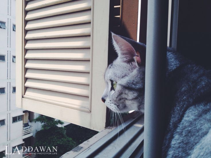 Model: Ty cat thailand iP4s/ #vscocam