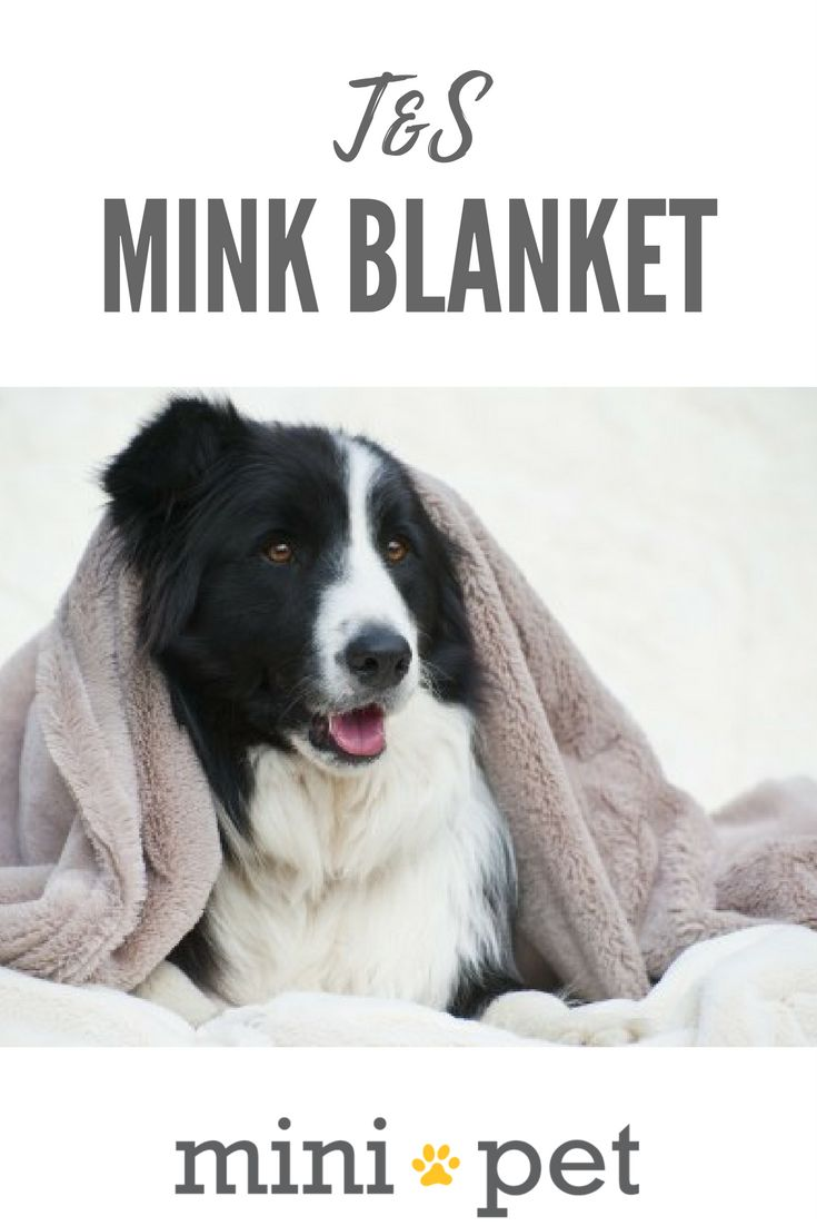[ON SALE] A beautiful, soft blanket that is all about cuddles!  Available in Mushroom and Cream Colours. Soft, poly plush fabric. Fully machine washable. Offers warmth and security.