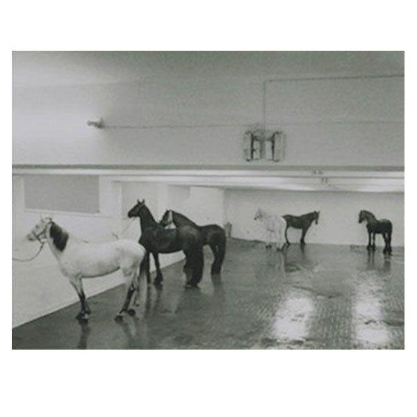 12 Cavalli - Jannis Kounellis