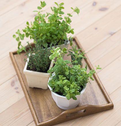 Kỹ thuật trồng cây cảnh trong chậu