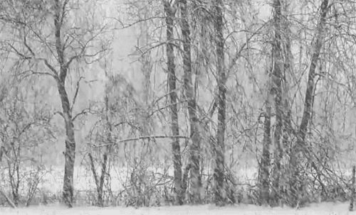 snow.gif...love it!