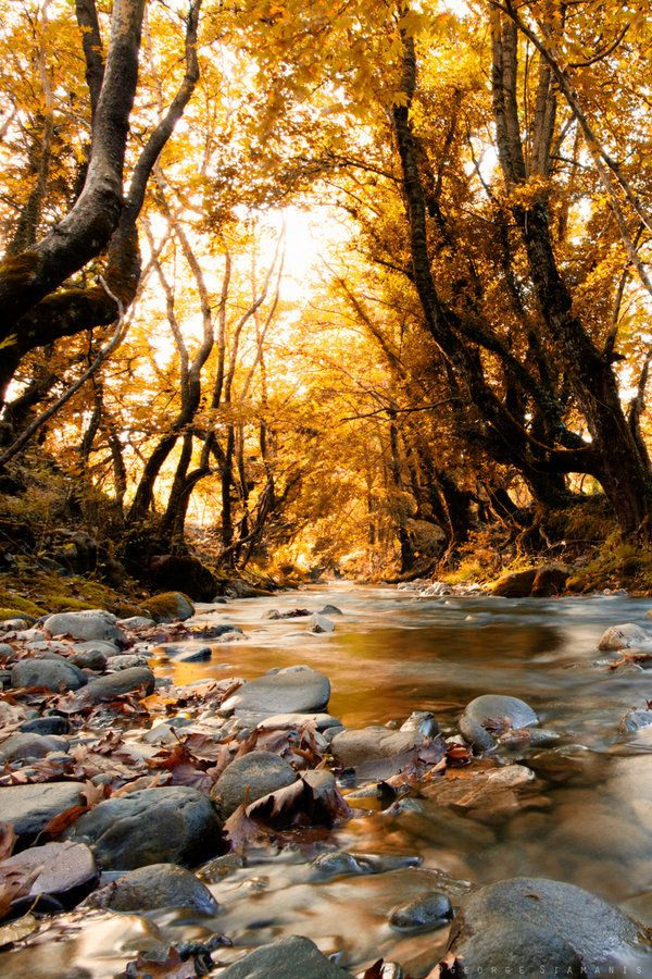 'Golden Forest' - photo by ~GeorgeSiamanis on deviantART;  taken in Evrytania, central Greece