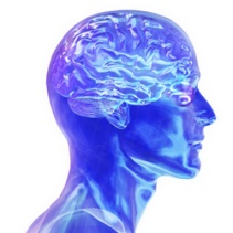 10 Latest Research Studies About Human Brain | Facts List