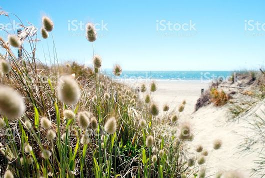 """LazingBee Photos NZ on Twitter: """"Happy New Year #Aotearoa, Wherever #2017 Leads You! #HappyNewYearNZ #NZ #Stockphotos for all your needs this year. """""""