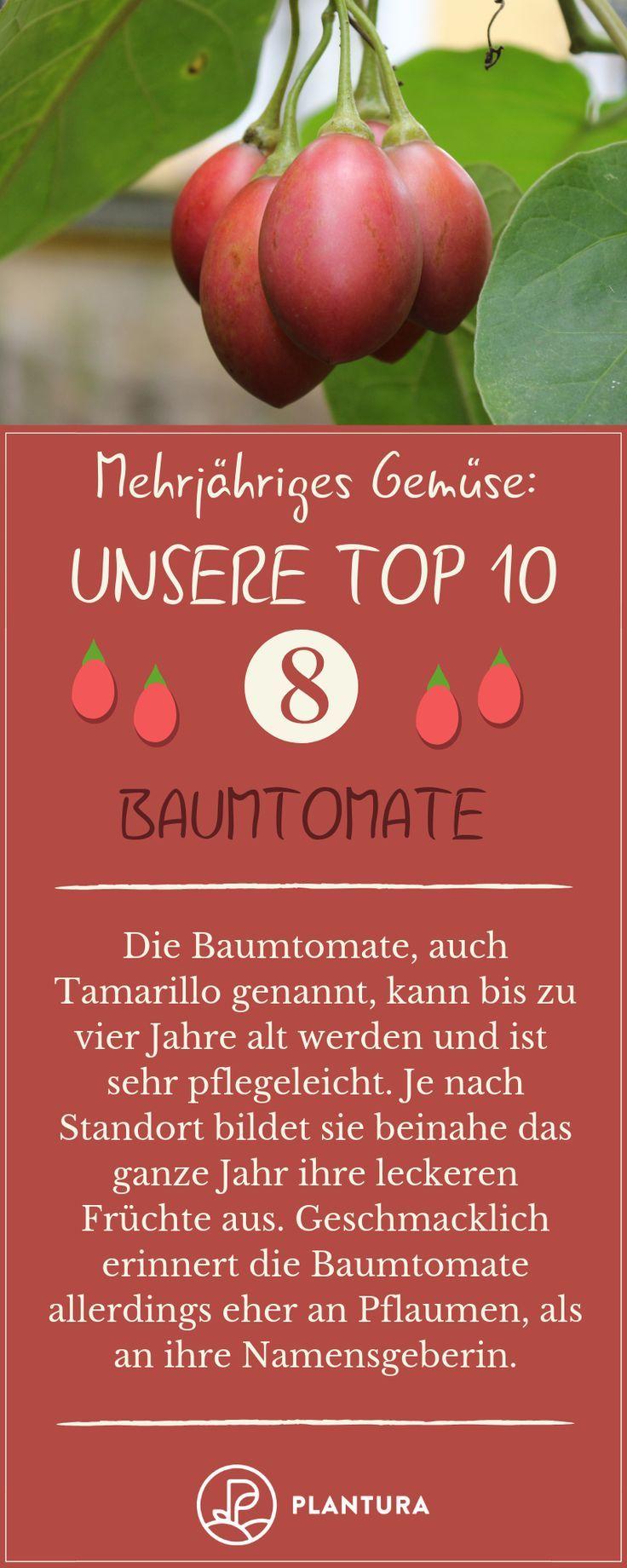 e8ae222ccd56 Mehrjähriges Gemüse: Die 10 besten Arten - #Arten #besten #die ...
