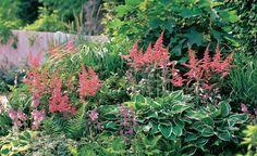 Üppige Fülle braucht keinen Platz an der Sonne. Diese Komposition aus Prachtspieren (Astilbe) und Funkien (Hosta 'Francee' und 'Patriot') beweist es. Den Hintergrund bildet eine Eichenblatt-Hortensie (Hydrangea quercifolia)