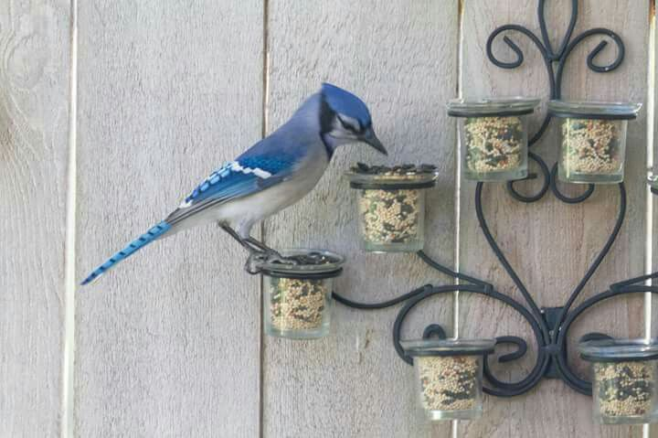 What a wonderful idea for a birdfeeder! It's an upcycled candle holder that mounts to a wall.