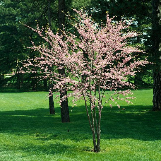 Add reliable color to your yard with these top-rated flowering trees and shrubs: http://www.bhg.com/gardening/trees-shrubs-vines/trees/best-flowering-trees-shrubs/?socsrc=bhgpin040814floweringtrees