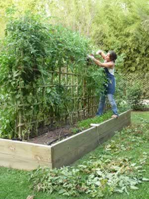 consejos sobre cuando empezas y las plantaciones